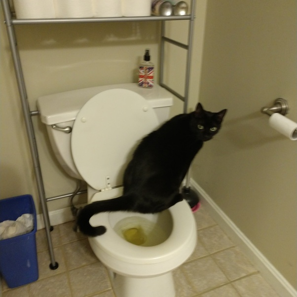 Have You Been Able To Teach Your Cat To Use The Bathroom On The