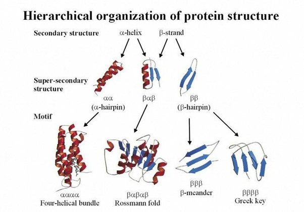 the nature structure and function of domains in proteins Further, multiple domains provide proteins with both structural (domain motion/ interaction) and functional plasticity (involving new functional.
