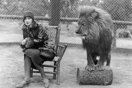 Did An Mgm Lion Really Kill Its Trainer
