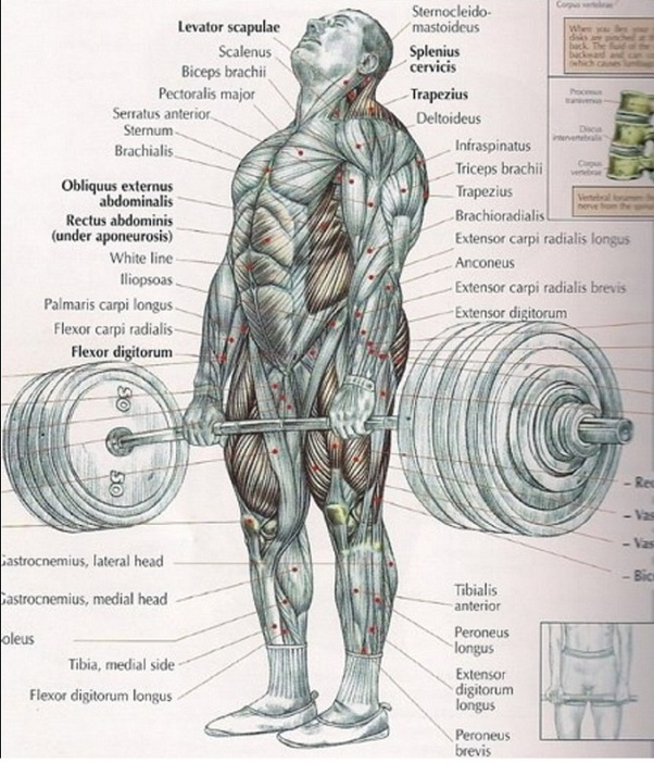 Why is a deadlift important for us? - Quora