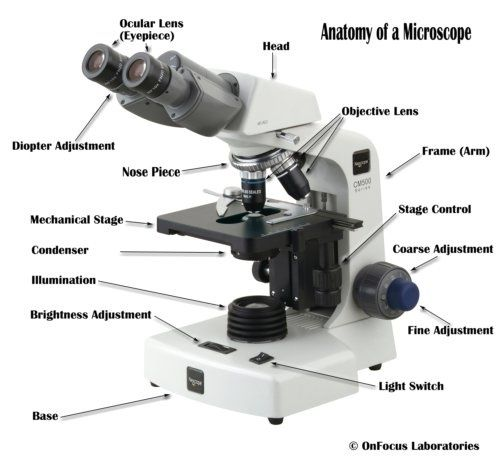 How Many Lenses Are Used In A Compound Microscope?