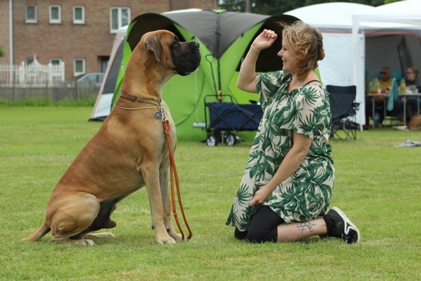 What's the biggest dog you've ever seen and why? - Quora
