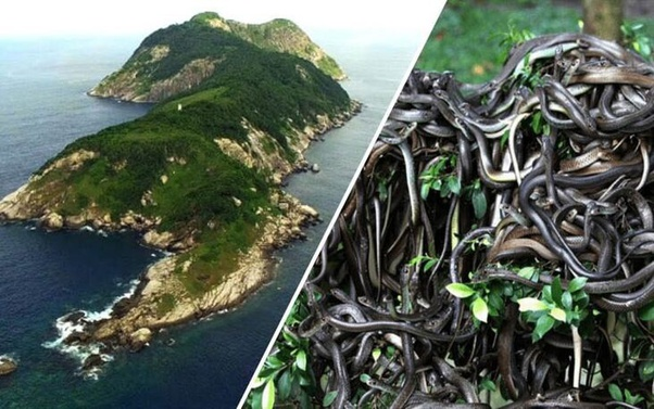 What is Snake Island? - Quora