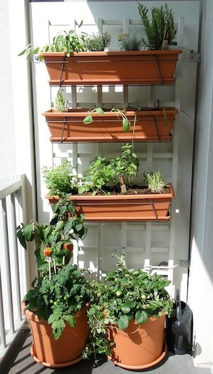 Marigolds, Button Roses And Asters Can Be Easily Grown In Portable Gardens  ...