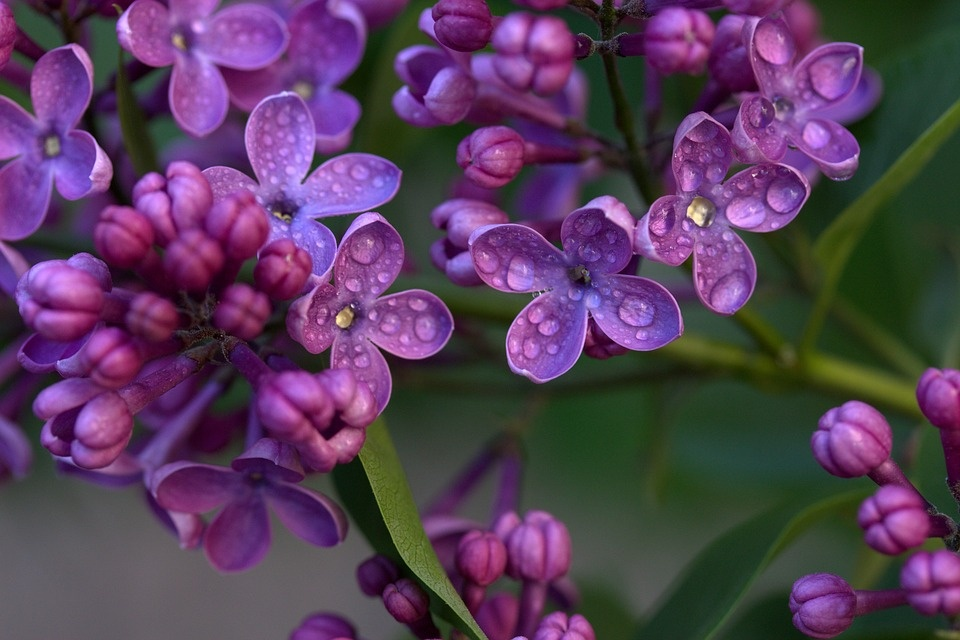 What Are Some Of The Most Fragrant Flowers In The World Quora