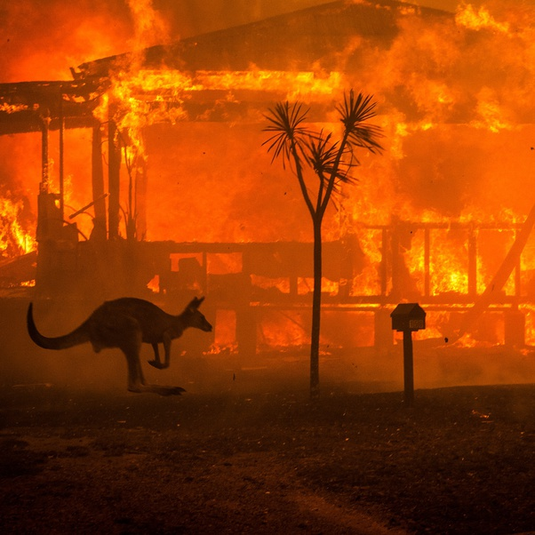 fires with Kangaroo