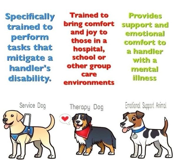 How to get my dog certified for to be an ESA/service dog - Quora