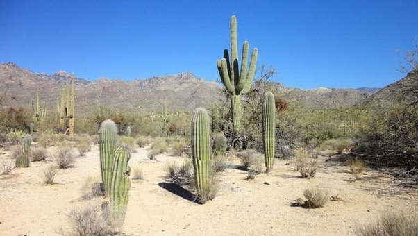 To Compensate For That Cacti Have Developed Special Proclivities Allow Them Conserve The Water They Receive A Long Time