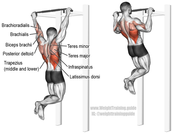 Miraculous What Muscle Groups Are Worked In A Bench Press Versus A Chin Gamerscity Chair Design For Home Gamerscityorg