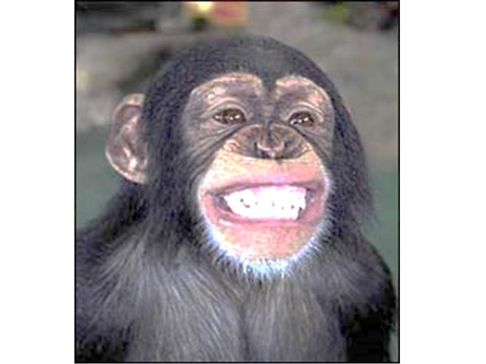Who would win in a cage fight, an alpha chimpanzee or Arnold