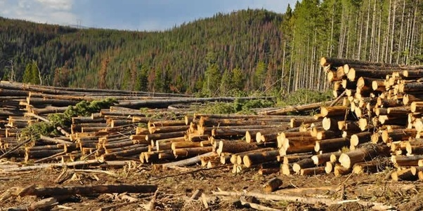 Forests: What are the causes of deforestation? - Quora