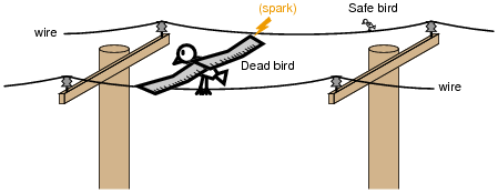 Would i die if i touch a high voltage transmission line with one would i die if i touch a high voltage transmission line with one hand if i have no contact with the ground if yes then how come birds dont die when they publicscrutiny Choice Image