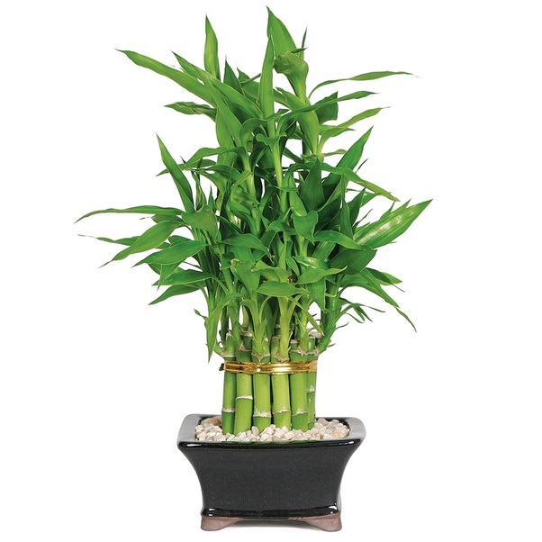 What Are The Best Indoor Plants To Grow In India Quora