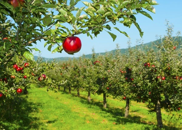 What does it mean to bear fruit as a Christian? - Quora