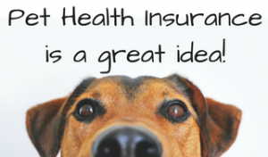 What Are Good Pet Health Insurances Out There That Covers Present