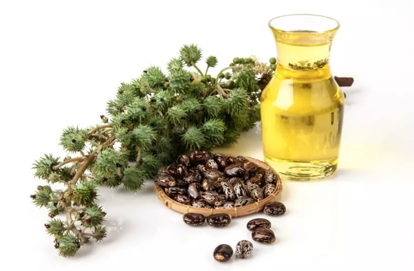 What are some of the beneficial uses of castor oil? - Quora