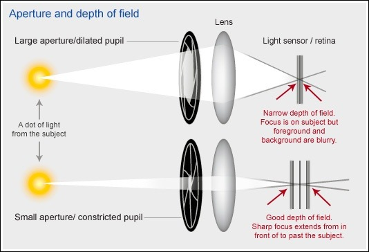 How to increase the depth of field on a microscope quora you want to decrease your collection angle meaning get your beam more parallel ccuart Images