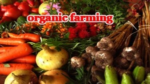 What is the limitation of organic farming? - Quora