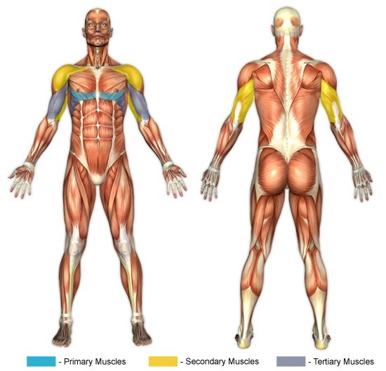 What are good exercises and food to increase chest width and build ...
