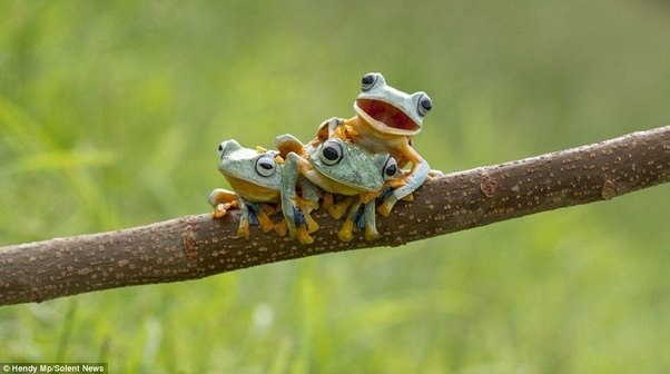 What are examples of amphibians? - Quora 10 Examples Of Reptiles