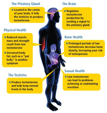 chronic prostatitis low testosterone