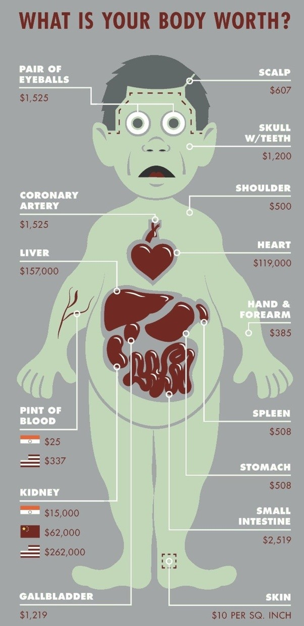 How much are the organs in the human body worth? - Quora