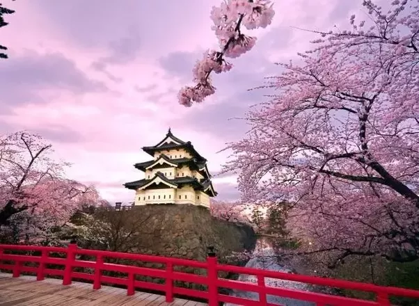 Why Are Cherry Blossoms A Japanese Symbol Quora