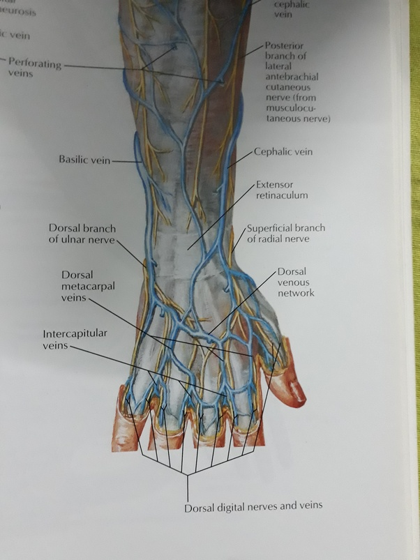 Is It Normal To See Veins On Your Palm Quora