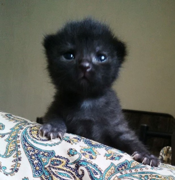 Is It True That Black Kittens Are Harder To Place For