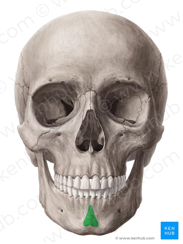 What Are The Unpaired Facial Bones Quora