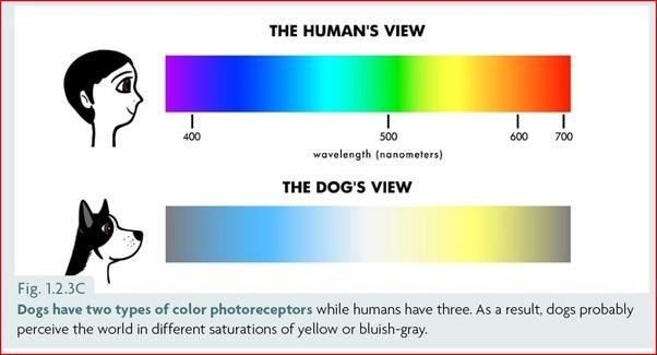 How Good Is S Dogs Eyesight