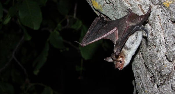 However You Should Ensure That No Other Bat Comes Around Because A Colony In Your House Will Cause Serious Problems Case Of Infestation