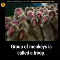 What is a group of monkeys called? - Quora