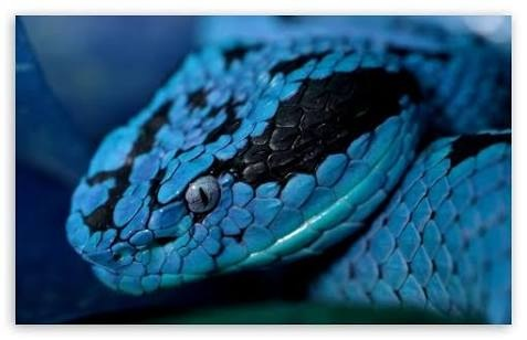 What Does It Mean To See A Blue Snake In Water In Your Dreams Quora