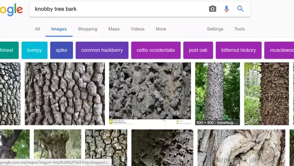 Google bark