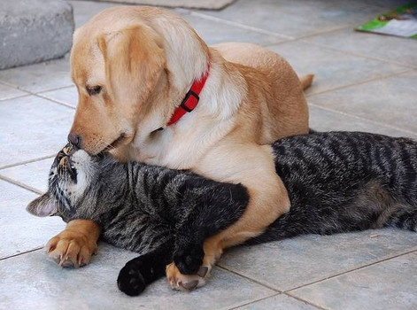 When Can Puppies Interact With Other Dogs