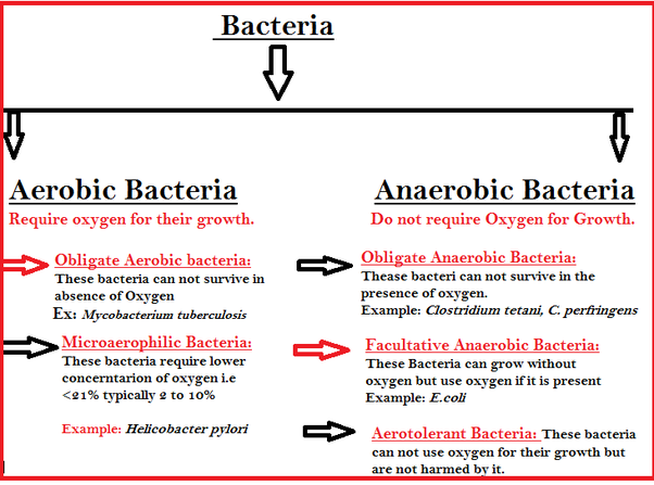 what are some examples of anaerobic bacteria quora