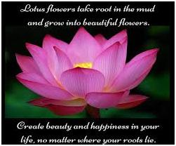 Is Lotus A Lovely Flower Quora