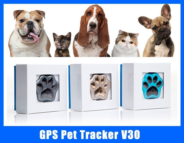Is there such a thing as a GPS tracking microchip for a pet