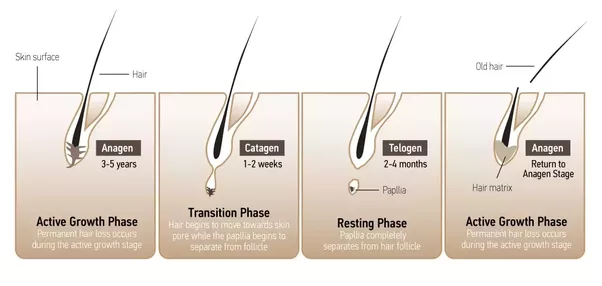 Hair Actually Grows In Three Stages Anagen Catagen And Telogen Phases Is A Growth Phase That Lasts From 2 5 Years Transition
