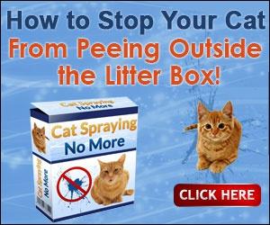 cat can rubbish box
