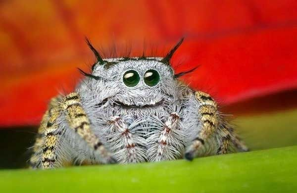 What Are The Most Adorable Kinds Of Pet Tarantulasspiders