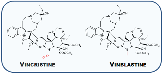 What is the mechanism of action of vinorelbine quora its clear that they are related in nature vindoline and catharanthine react together to an intermediate anhydrovinblastine an air unstable intermediate ccuart Choice Image