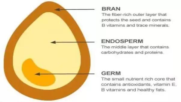 What is GMO golden rice? - Quora Golden Rice Diagram
