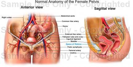 What organs are near the uterus quora what organs are near the uterus ccuart Images