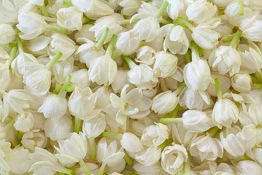 What are some of the most fragrant flowers in the world quora it has a very strong fragrance so strong enough that it is a aphrodisiac and triggers migraine in many mightylinksfo