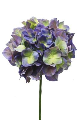 What are some purple and green wedding flowers? - Quora