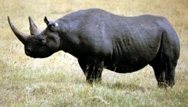 what are some of the most recently extinct animals quora