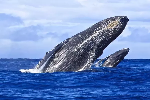 How many species of whales are there? - Quora