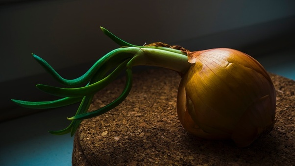 Which part of the plant is the onion? - Quora